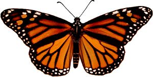monarchf